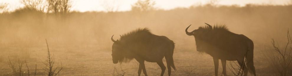 Trip – Namibian Safari