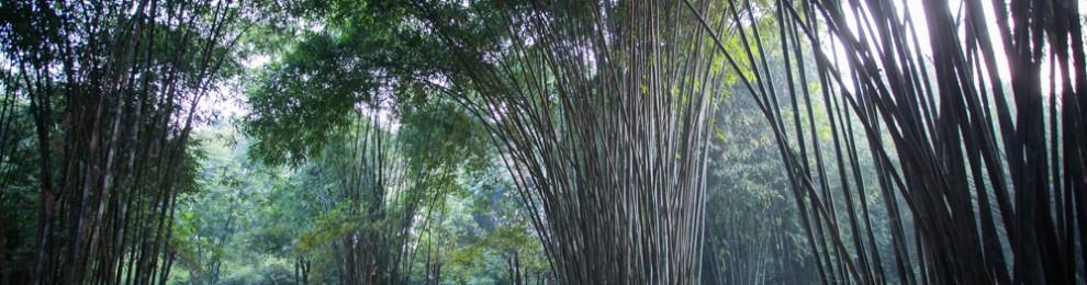 Chengdu Photo Walk